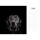 """HundeSinn Kalender """"Einfach Hund"""""""